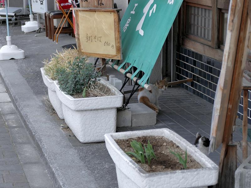 開店前のそば屋店先猫2