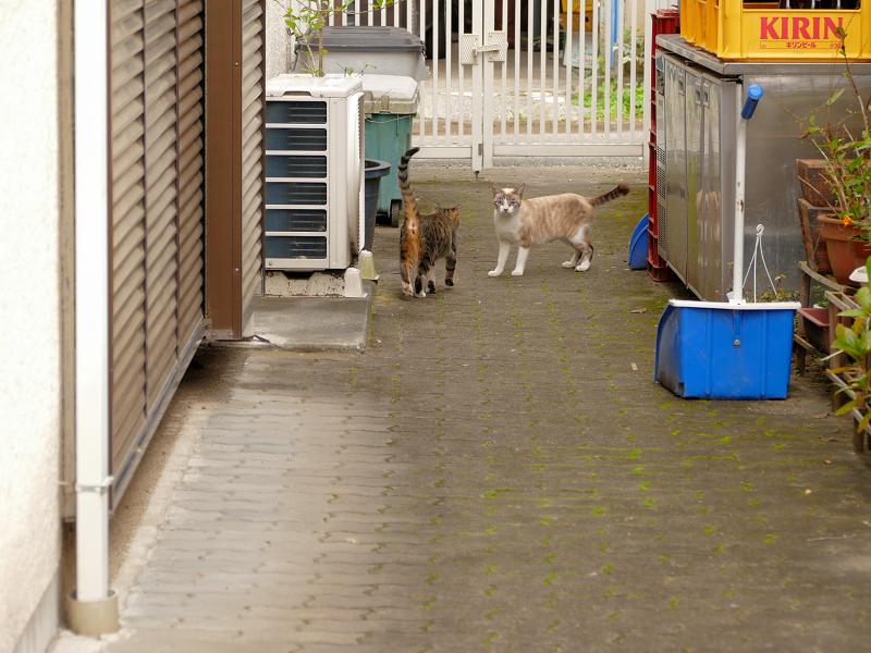 ブロック塀から降りた猫たち2