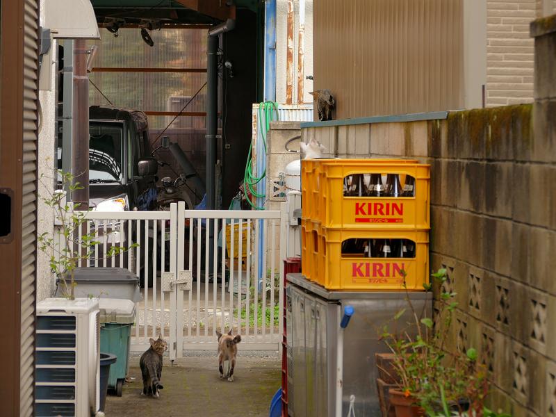 ブロック塀から降りた猫たち3