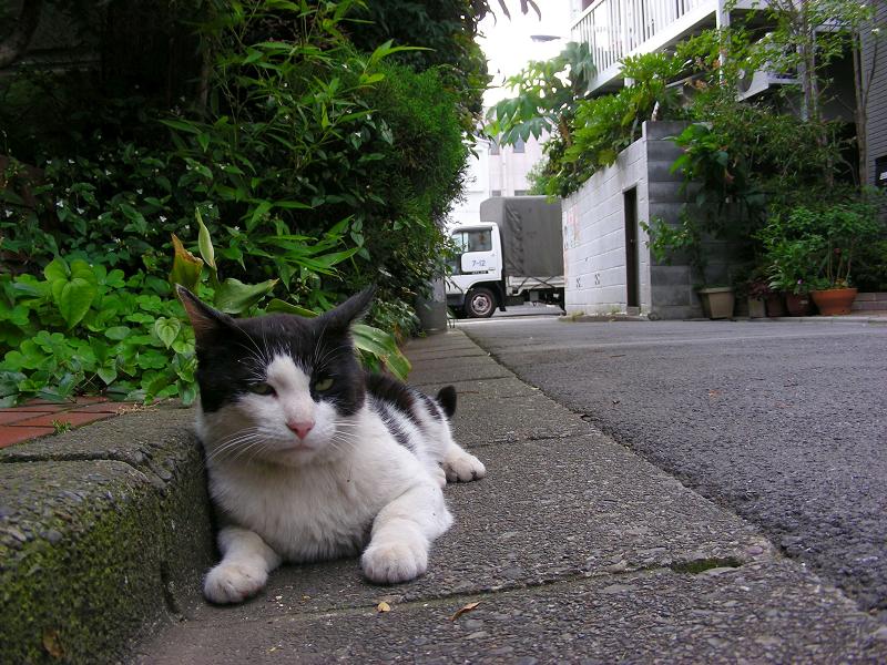 路地で寝そべる黒白猫1
