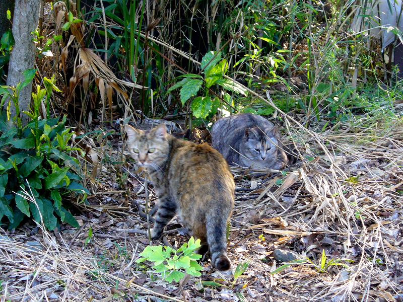 草むらの猫たち1