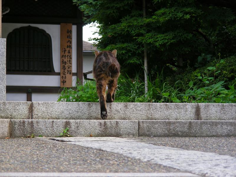門前のキジトラ猫2