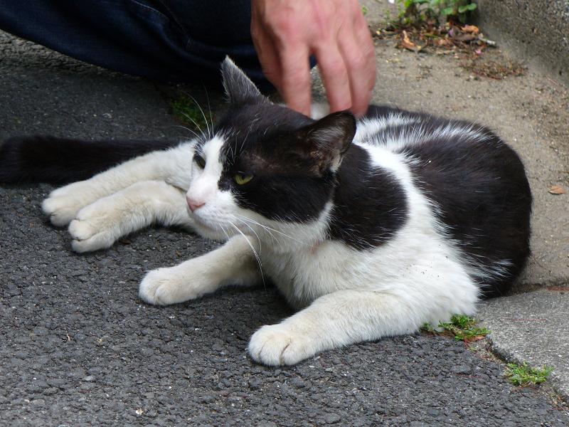 路地で寝そべる黒白猫2