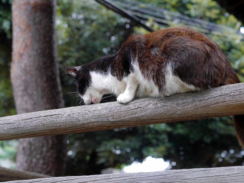 欄干に擦り付ける黒白猫1