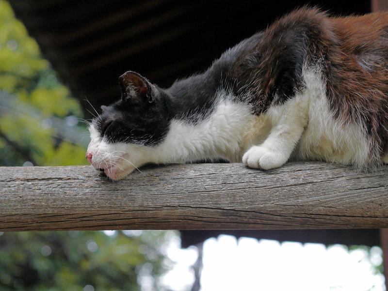 欄干に擦り付ける黒白猫2