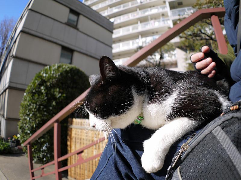 膝に乗っちゃった黒白猫1