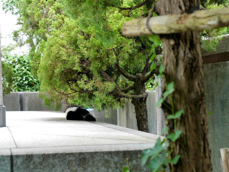 お堂の裏にいた白黒猫1