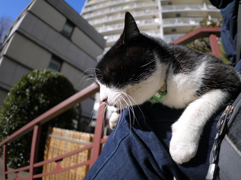 膝に乗っちゃった黒白猫2
