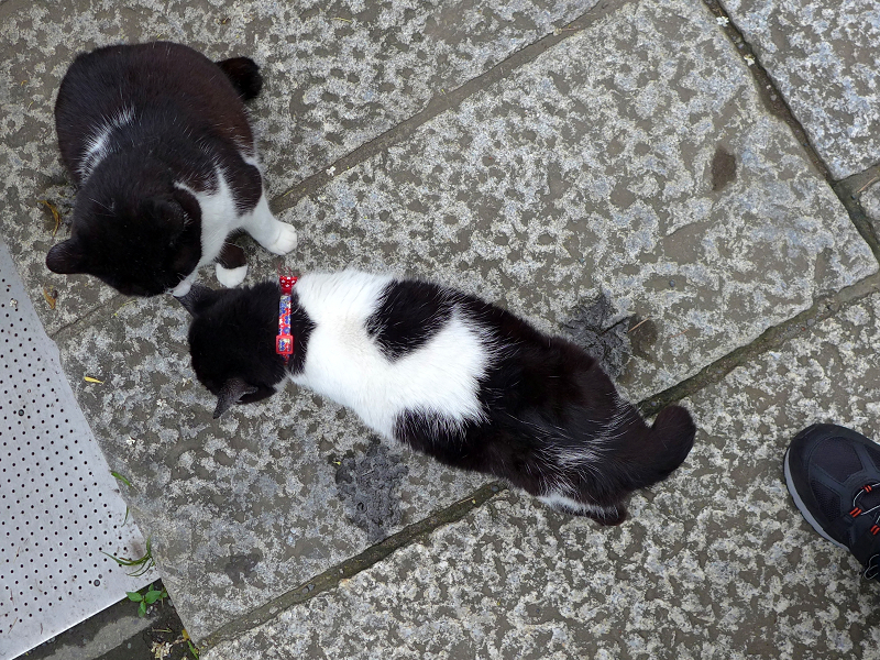 ハイアングル義理姉妹猫2