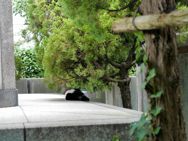 お堂の裏にいた白黒猫2