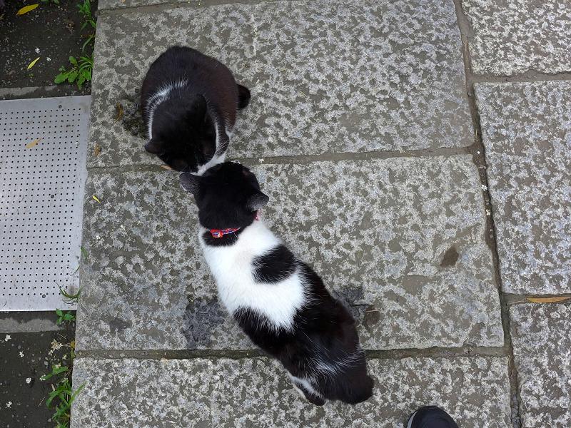 ハイアングル義理姉妹猫3