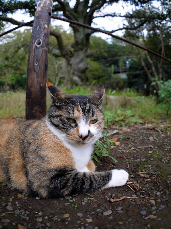 杭と三毛猫1
