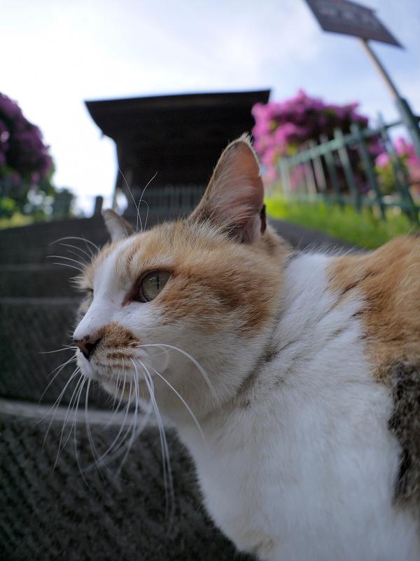 急階段下の三毛猫2
