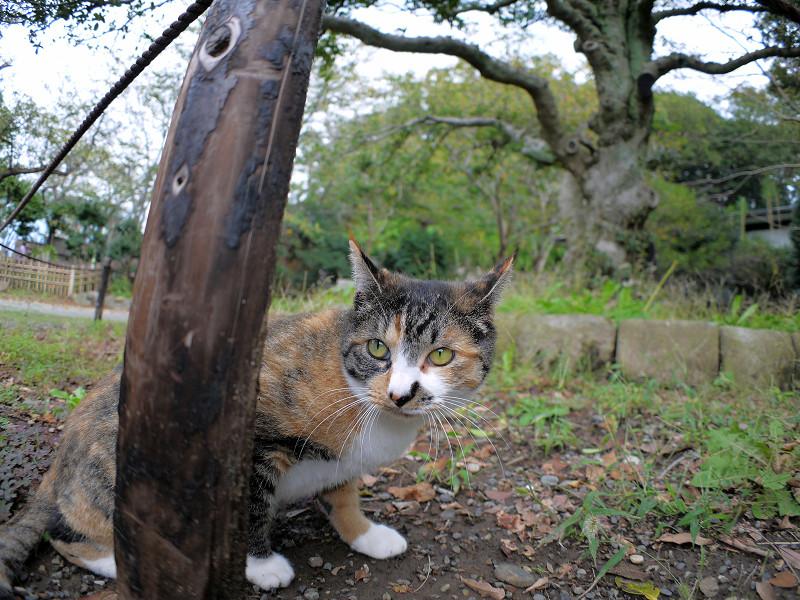 杭と三毛猫2