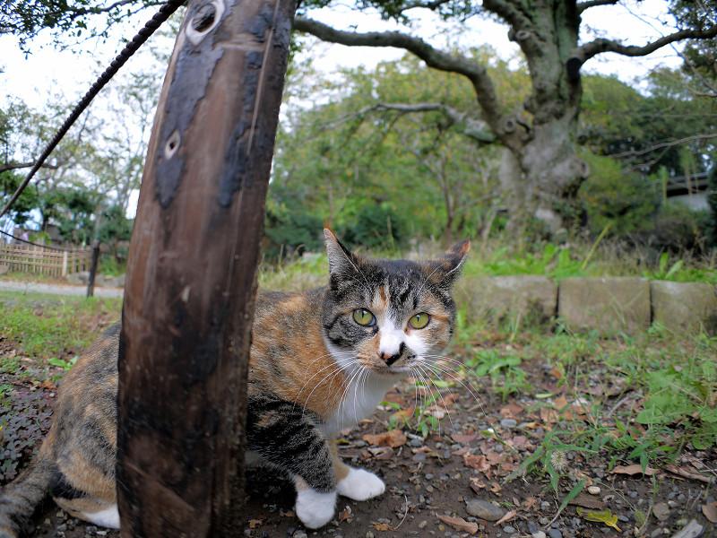 杭と三毛猫3