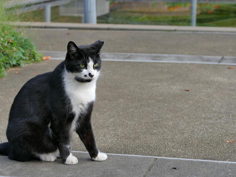 公園の黒白猫3