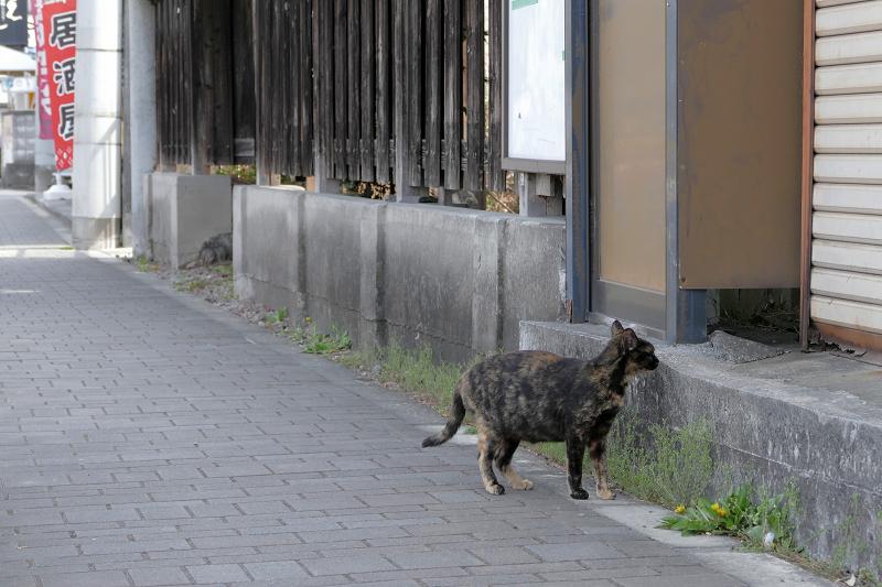 民家に入って行くサビ柄猫1