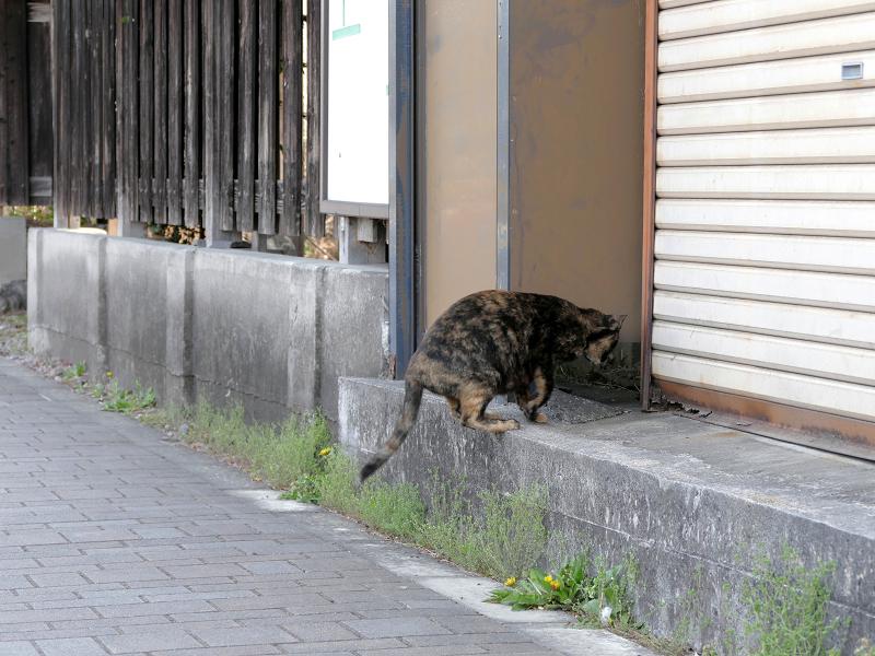 民家に入って行くサビ柄猫2