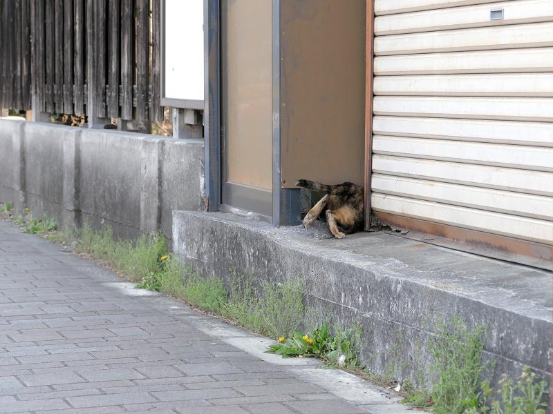 民家に入って行くサビ柄猫3