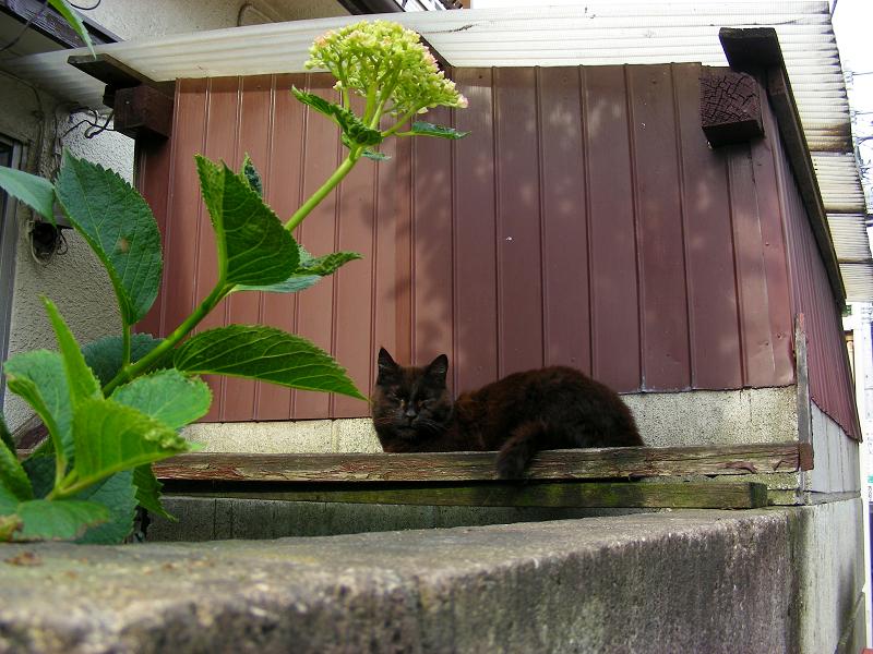 小屋の前の黒猫1