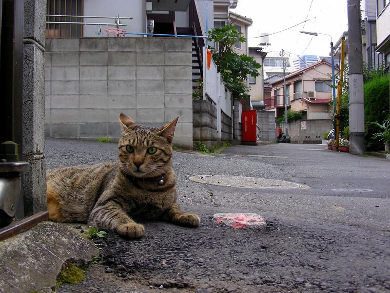 裏路地角キジトラ猫1