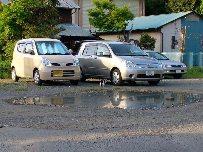 水たまり駐車場の猫1