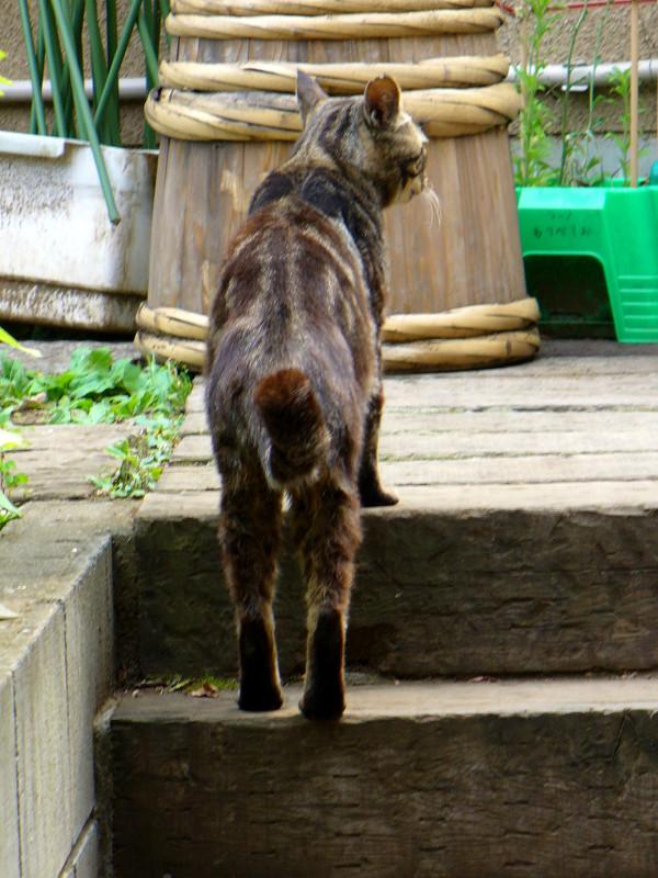 見回ってるキジトラ猫1