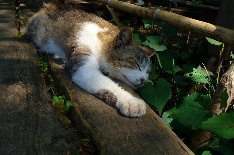 丸太ベンチのキジ白猫2