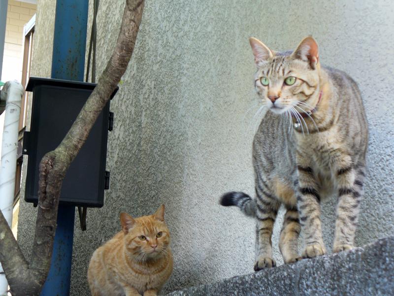 ブロック塀の猫たち2