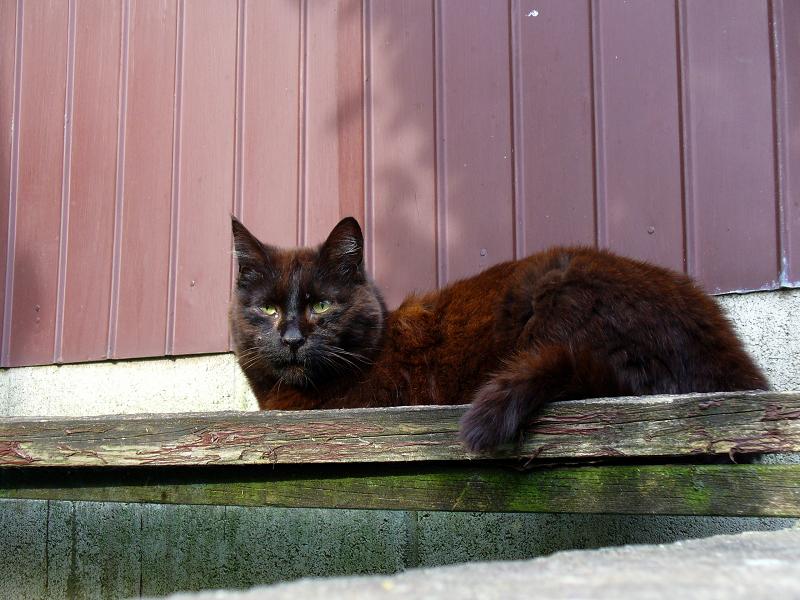 小屋の前の黒猫2