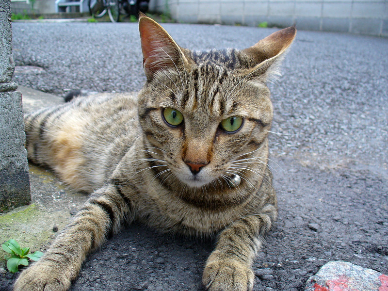裏路地角キジトラ猫2