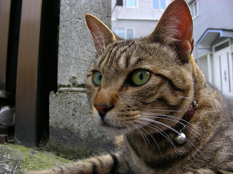 裏路地角キジトラ猫3