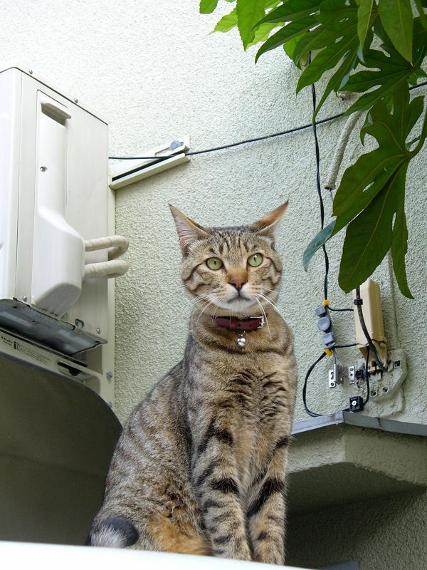 ブロック塀の猫たち3