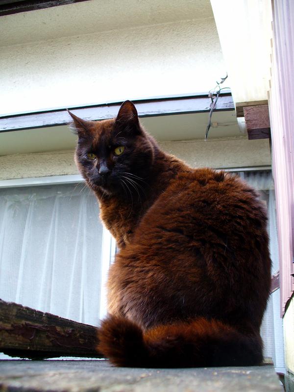 小屋の前の黒猫3