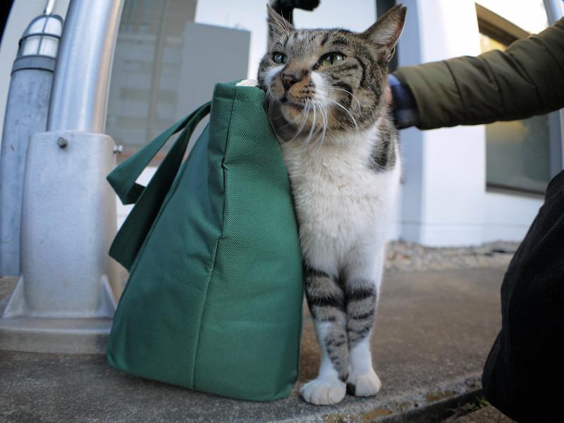 緑のバッグとキジ白猫2