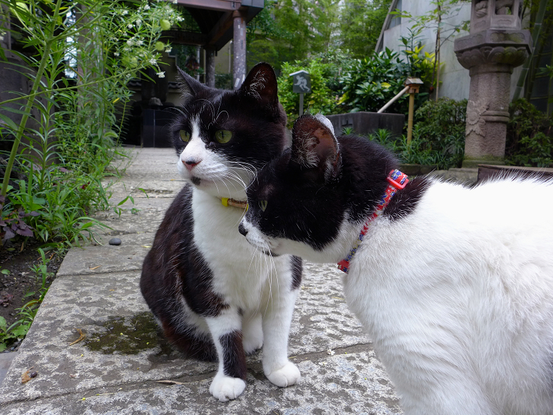 そばに寄っている義理姉妹猫1