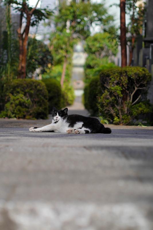 墓苑入口の黒白猫1