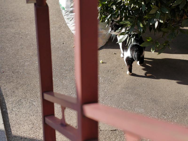 不愉快な白黒猫1
