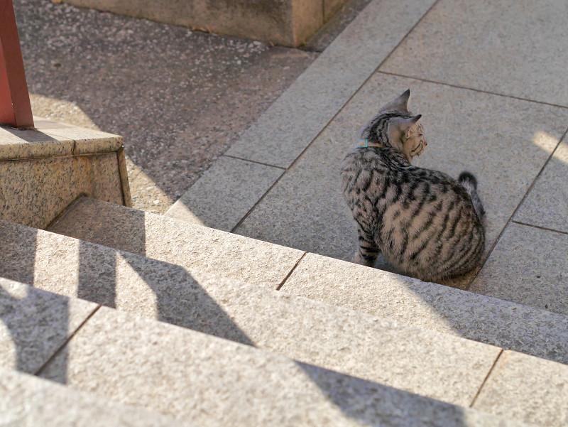 動き出すサバトラ猫