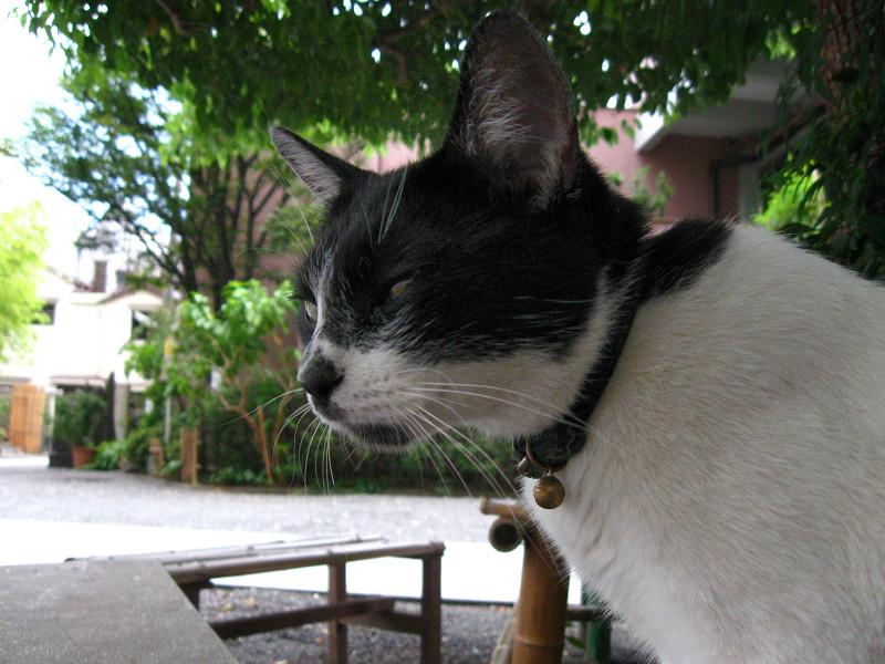 ベンチで睨む白黒猫