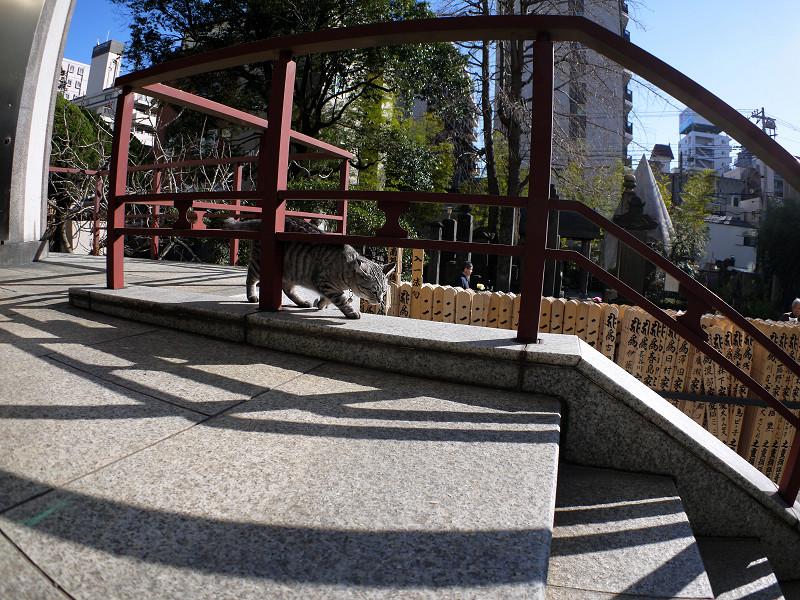 柵の向こうを歩くサバトラ猫2