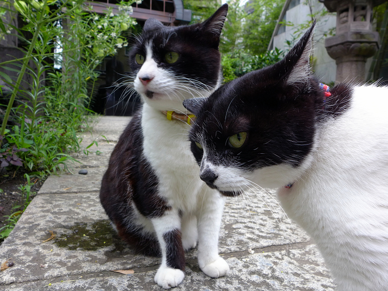 そばに寄っている義理姉妹猫2