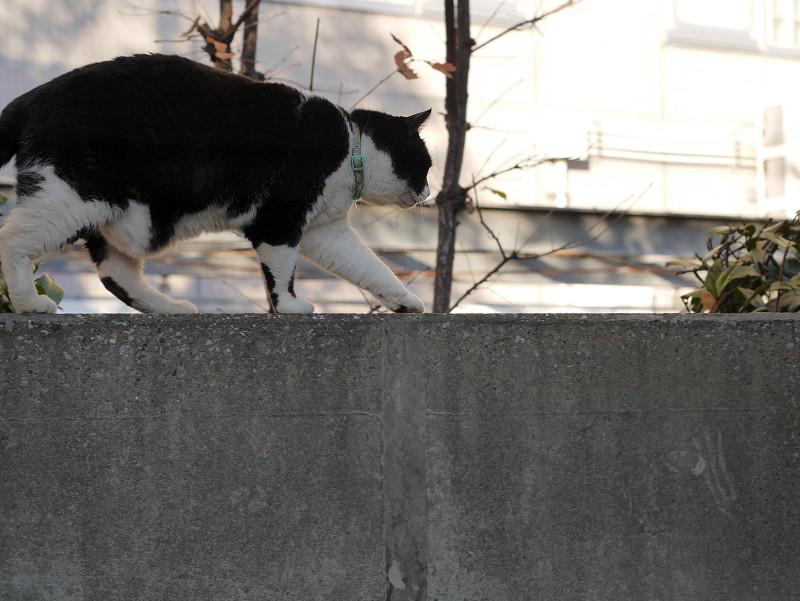 塀と黒白猫2