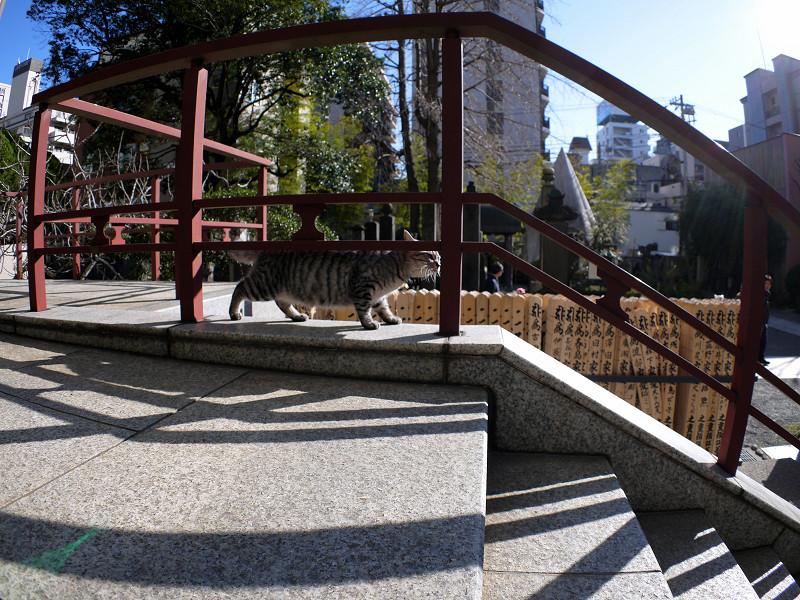 柵の向こうを歩くサバトラ猫3