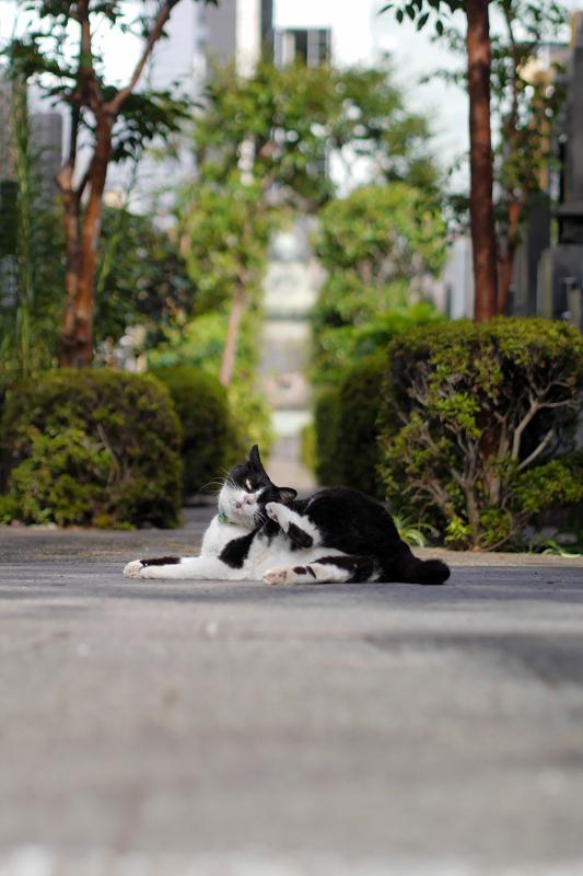 墓苑入口の黒白猫3