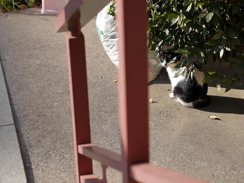 不愉快な白黒猫3
