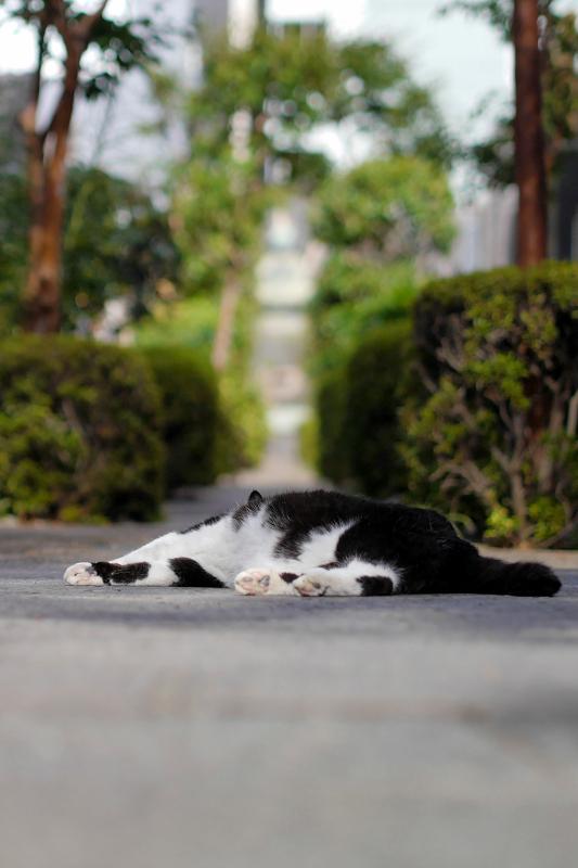 墓苑入口の黒白猫4