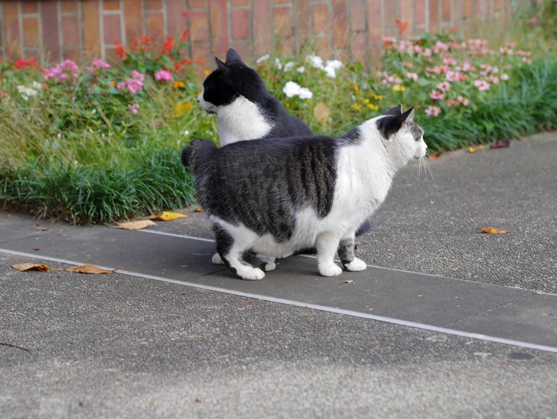 公園の猫2匹1
