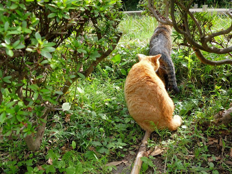 ニオイを嗅いでいる茶トラ猫