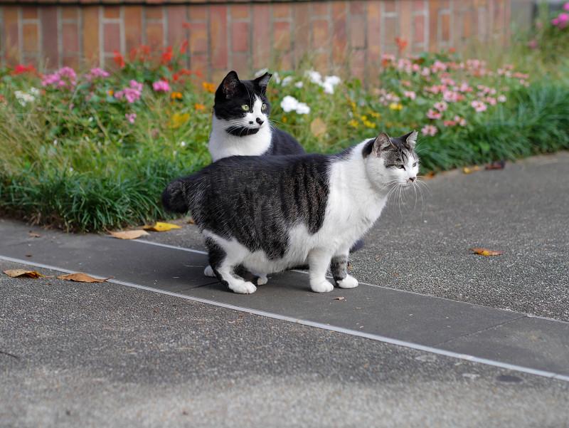 公園の猫2匹2